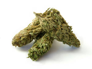 Possession of Marijuana Ticket